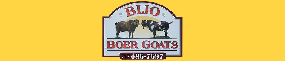 Bijo Boer Goats